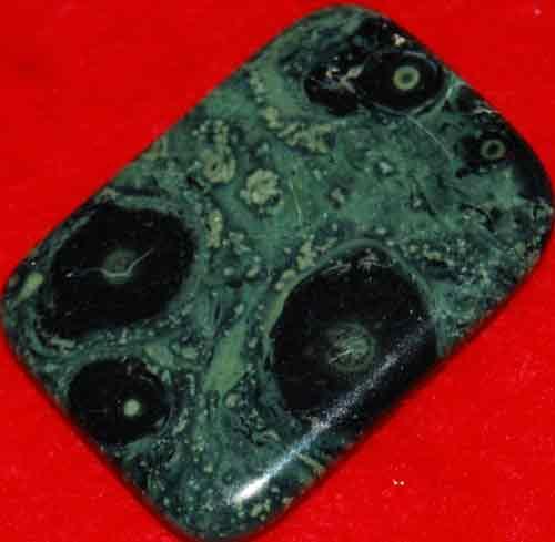 Kambaba Jasper Stromatolite Palm Stone #2