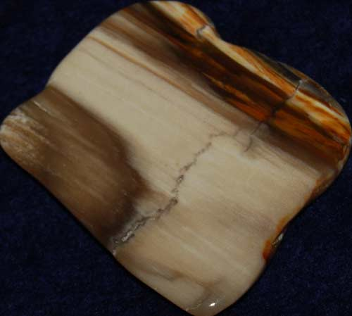 Petrified Wood Palm Stone #4