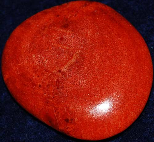 Red Coral Palm Stone #16