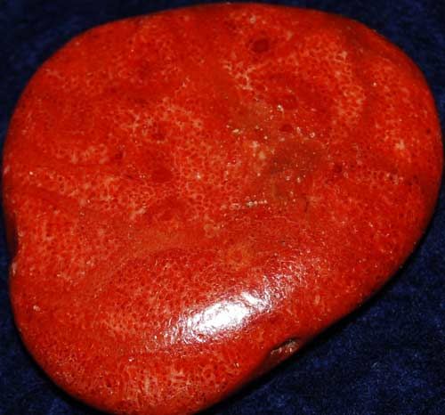 Red Coral Palm Stone #17