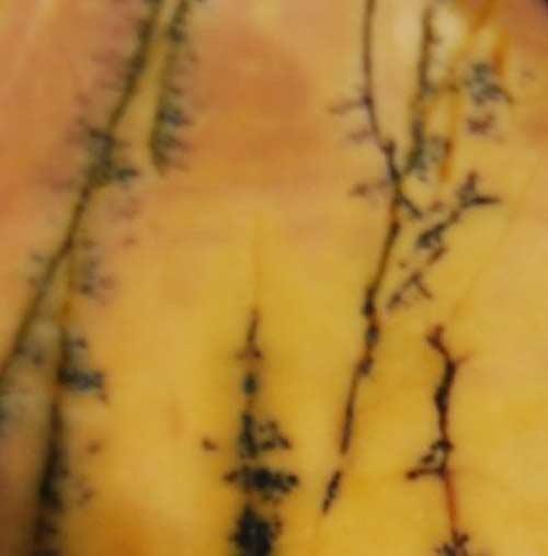 Yellow Feather Jasper Palm Stone #7