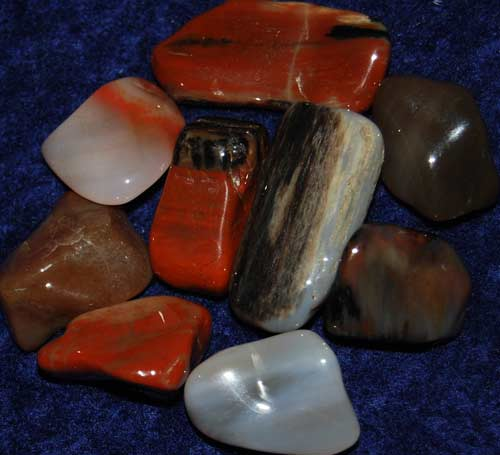 Nine Petrified Wood (Arizona) Tumbled Stones #8