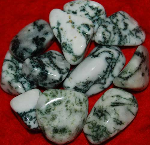 Eleven Tree Agate Tumbled Stones #2