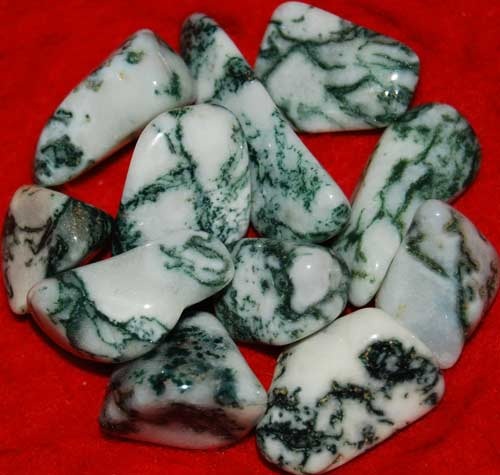 Eleven Tree Agate Tumbled Stones #7