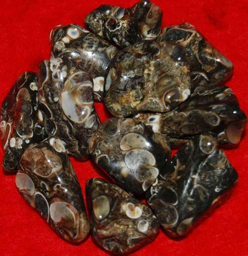11 Turritella Agate Tumbled Stones #10
