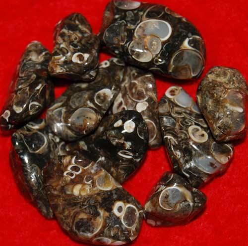 11 Turritella Agate Tumbled Stones #2