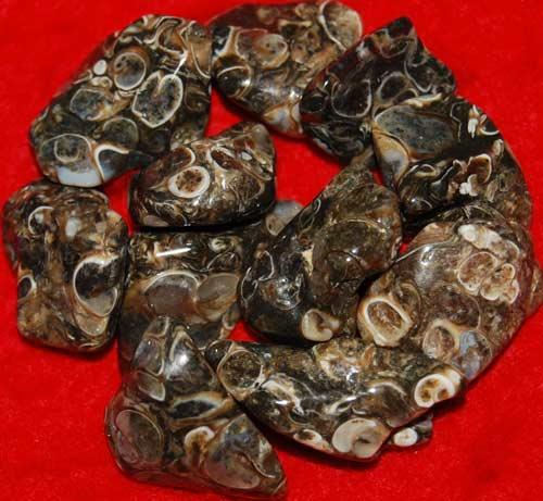 11 Turritella Agate Tumbled Stones #6