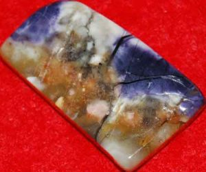 Tiffany Stone Palm Stone Slice #9